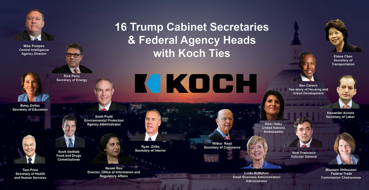 Koch strength increases